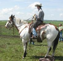 Stock horse heeling in the branding corral
