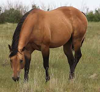 AQHA Stallion, Page Mr Star Bucks, reining prospects for sale