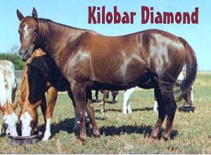 APHA horses, ranch horses, Paint horses, horse sales, horse auctions, horses for sale, AQHA horses for sale, APHA horses for sale, foals, horses, breeding, stallions, mares, broodmares, brood mares, paint mares, paint broodmares, quiet temperment, geldings, chestnut, sorrel, brown, bay, gelding, foundation, bloodlines, foundation bloodlines, pedigree, paint breeders, apha breeder, mr robin boy, robin boy, painted robin, riding horses, trail horse, tobiano, overo, tovero, horse, paint, Horse Classifieds Ads, horse sales, horse for sale, APHA, American Paint Horse Association, American Quarter Horse Association, speed index, JC, jockey club, ROM, Superior, World Champion, performance points, SI, S I, Register of Merit, heading horses, heeling horses, heading and heeling horses, calf roping, calf-roping, rodeo, Paint Horses for Sale, paints for sale, horse ads, horse directory, horse classifieds, horse breed, aqha, apha, stallion, stud, studs, Saskatchewan, Sk, Sask, Canada, Canadian, horse auction, horse production sales, paint horse production sale, apha production sale, paint production sales, horse sale catalogues, south country production sale, south country horse breeders sale, south country horse sale, livestock auctions, horse auctions, agriculture, western canada, horse production sale, performance horses, Paint APHA breeders, APHA Paint horses, APHA cutting horses, Paint ranch horses, APHA rope horses, apha colts, colts, paint colts, fillies, apha fillies, paint fillies, breeding stock, Breeding, raising, training, registered Paint Horses in Canada, Ranch raised horses, pleasure riding,  reining, cutting, roping, working cow horse, breeding stallion, ranch raised, ranch-raised, futurity prospects, working cowhorse, APHA show prospects, paint show horses