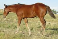 2004 bay filly for sale