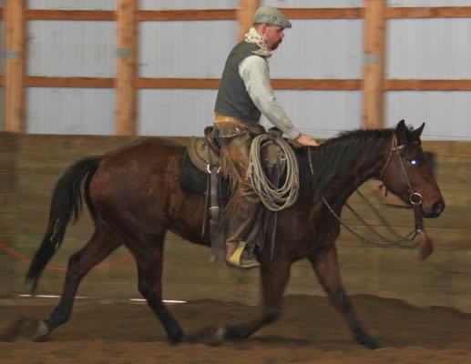 2008 AQHA Bay Appendix Gelding for sale Paint, APHA foals